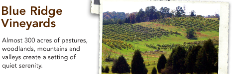 Blue Ridge Vineyards - Almost 300 acres of pastures, woodlands, mountains and valleys create a setting of quiet serenity.